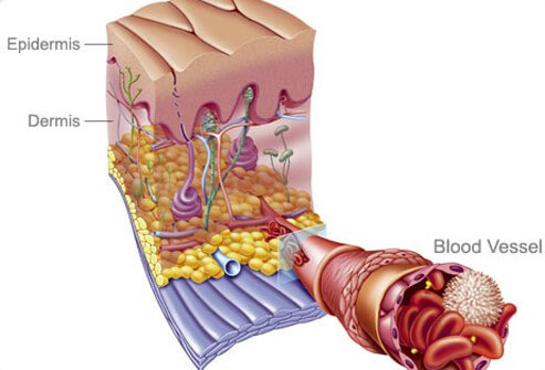 An illustration of the skin.