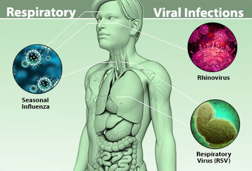 viral infection types, treatment, and prevention, Muscles