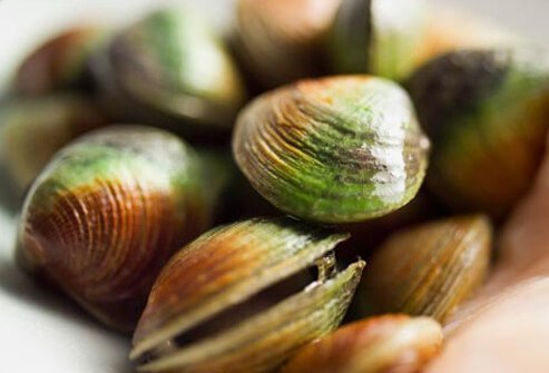 Photo of raw clams.