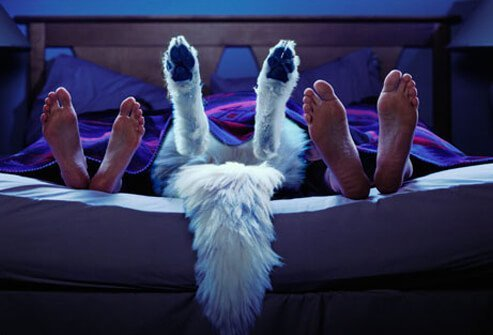 Pets may prevent you from getting good sleep.