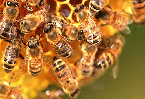 It begins when a honeybee stops at a flower and sucks out the sweet liquid nectar.