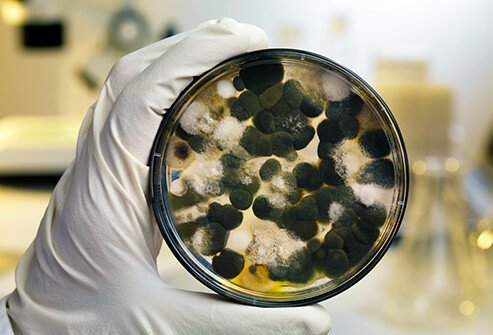 Mold can cause allergies.