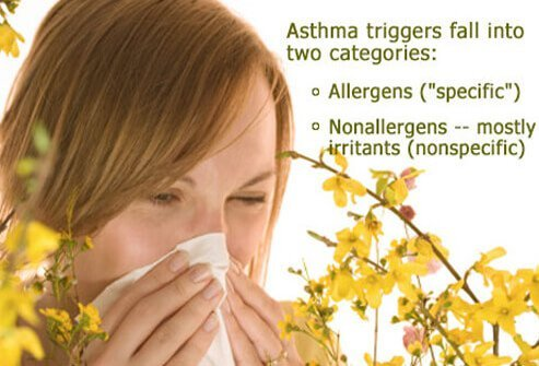 Asthma triggers fall into two categories: allergens (specific) and nonallergens – mostly irritants (nonspecific).