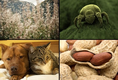 Wind blowing pollen into the air (top left), a magnified image of a dust mite (top right), a dog and a cat (bottom left), and peanuts (bottom right) are examples of allergens that may cause asthma.