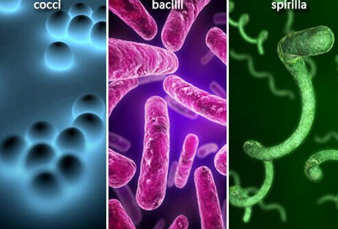 Bacterial Infections 101: Types, Symptoms, and Treatments