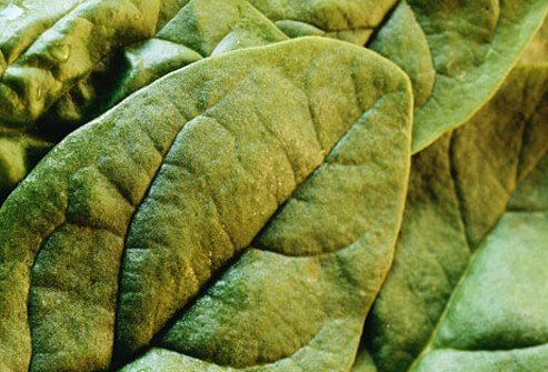Close-up of spinach leaves.