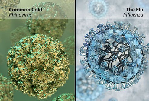 a cold or the flu how to tell the difference