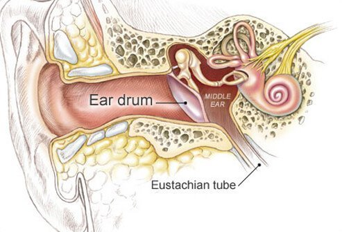 ear infection symptoms, causes, and treatmentdiagram of the inside of an ear (eardrum, eustachian tube, and middle ear