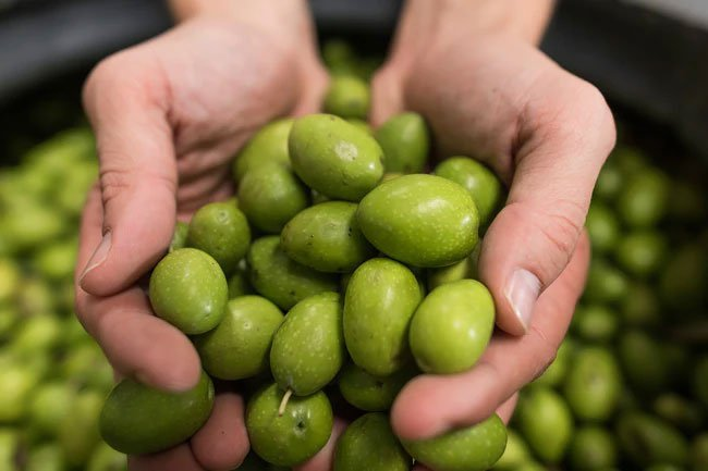 You get olive oil from grinding or pressing whole olives and collecting the oil that seeps out.
