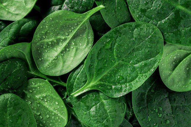 Eating spinach benefits your heart and immune system.
