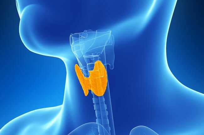 An underactive thyroid gland may cause you to pack on the pounds.