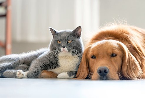 When Animal Allergies Attack Pet Allergy Symptoms