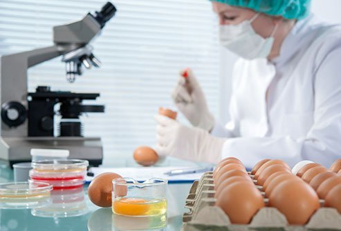 Some forms of the bacteria are more likely to infect poultry, while others choose different animal targets.