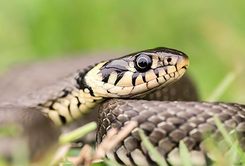 Fear of snakes is called herpetophobia.