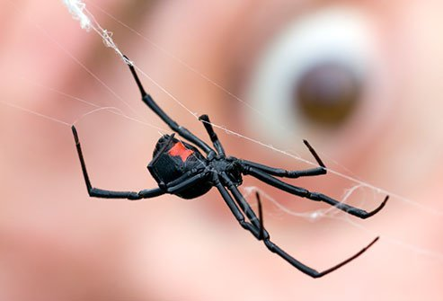 Spider Bites How Dangerous Are They