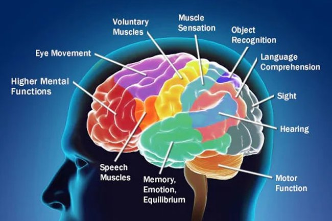 Brain cancer may cause headaches, seizures, vision and hearing loss and balance problems.